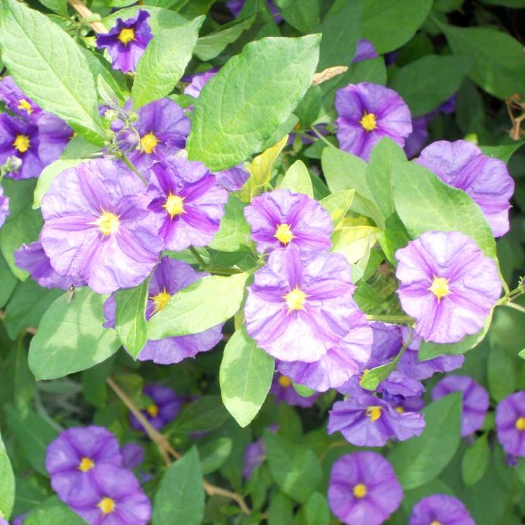Blumen_3